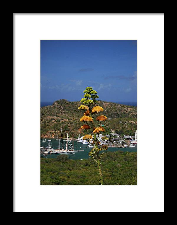 Caribbean Islands Framed Print featuring the photograph Antigua National Flower by Gary Wonning