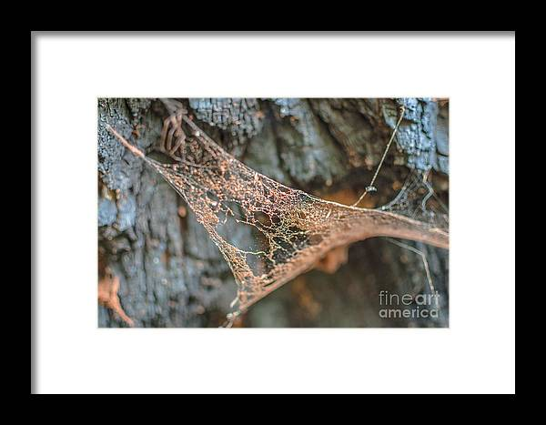Landscape Framed Print featuring the photograph Apathy by Lyudmila Prokopenko