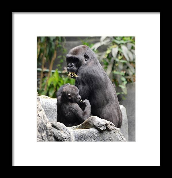Framed Print featuring the digital art Apes by Laurie Glowacki