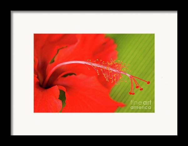 Nature Framed Print featuring the photograph Aphrodisiac by Julia Hiebaum