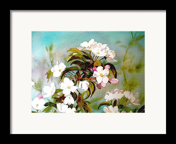 Blossoms Framed Print featuring the painting Apple Blossoms by Faye Ziegler