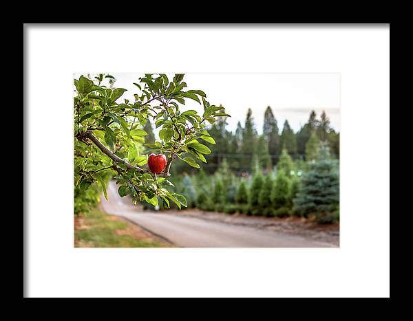Apple Framed Print featuring the photograph Apple Hill by Elizabeth Delgado