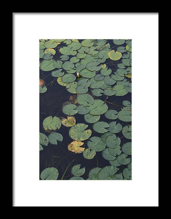 Wild Flowers Framed Print featuring the photograph Approaching Lilly by Alan Rutherford