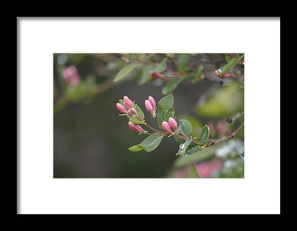 Rain Framed Print featuring the photograph April Showers 3 by Antonio Romero