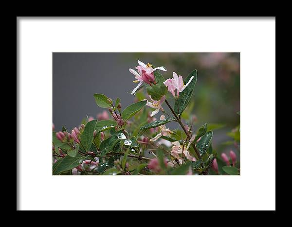 Rain Framed Print featuring the photograph April Showers 7 by Antonio Romero