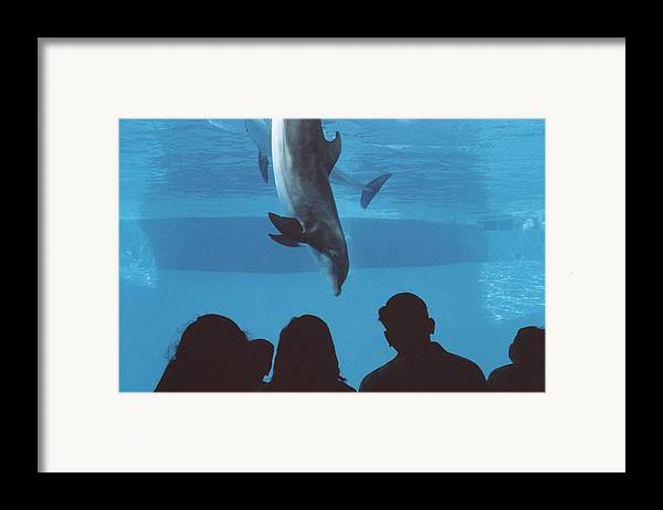 Dolphin Framed Print featuring the photograph Aquarium Dolphin by Wendell Baggett
