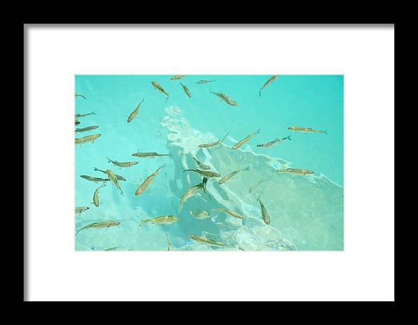 Fish Framed Print featuring the photograph Aquarium by Elisa Locci