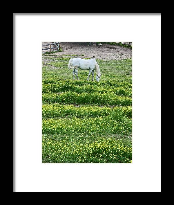 White Arabian Framed Print featuring the photograph Arabian by Beebe Barksdale-Bruner
