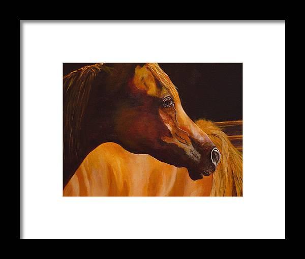 Arabian Horse Framed Print featuring the painting Arabian Horse Oil Painting by Mary Jo Zorad