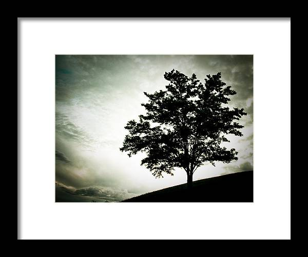 Tree Framed Print featuring the photograph Arbol by Felix M Cobos