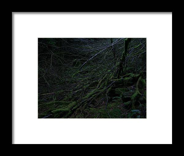 Arnor Framed Print featuring the photograph Arboreal Forest by Jim Thomson