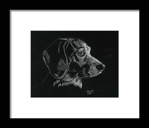 Scratchboard Framed Print featuring the drawing Archie by Norma Rowley