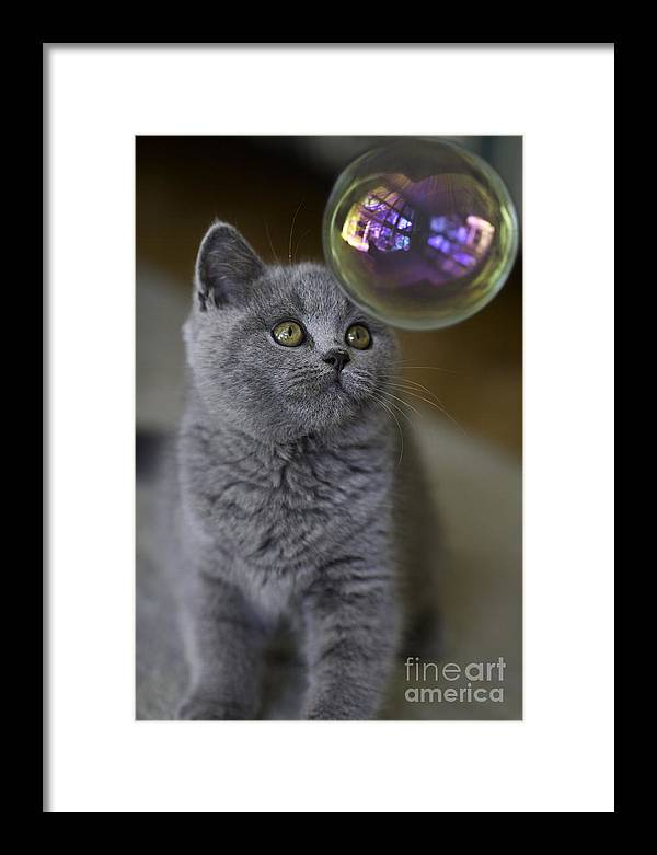 Cat Framed Print featuring the photograph Archie With Bubble by Sheila Smart Fine Art Photography