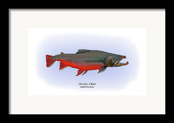 Arctic Char Framed Print featuring the painting Arctic Charr by Ralph Martens