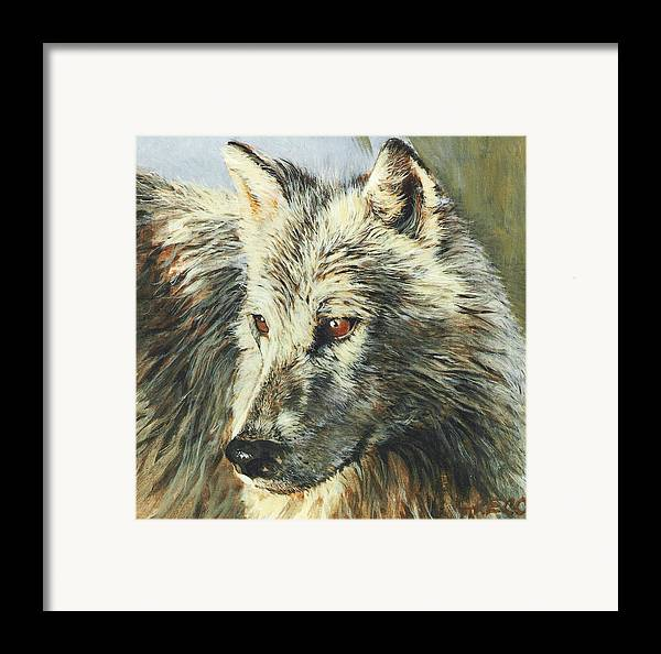 Wolf Framed Print featuring the painting Arctic Wolf by Steve Greco