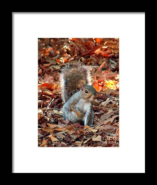 Squirrel Framed Print featuring the photograph Are You Friendly by Sue Melvin