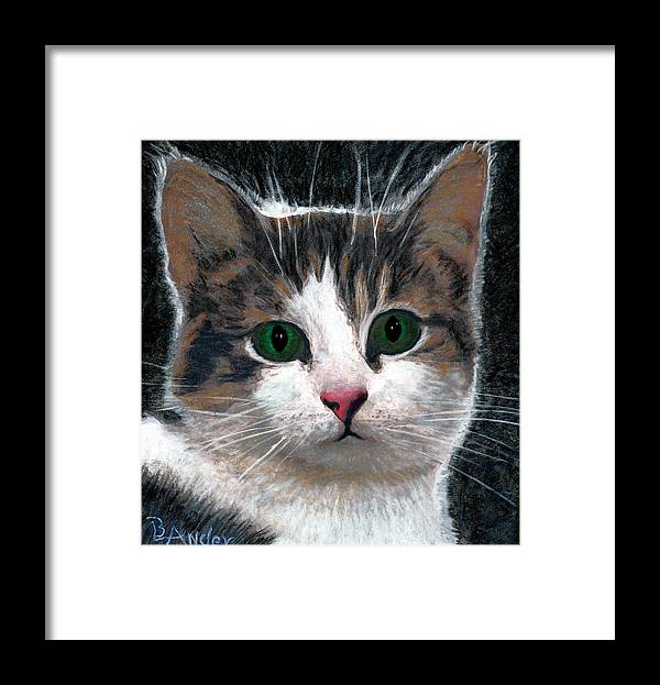 American Shorthair Framed Print featuring the drawing Are You Talking To Me by Brent Ander