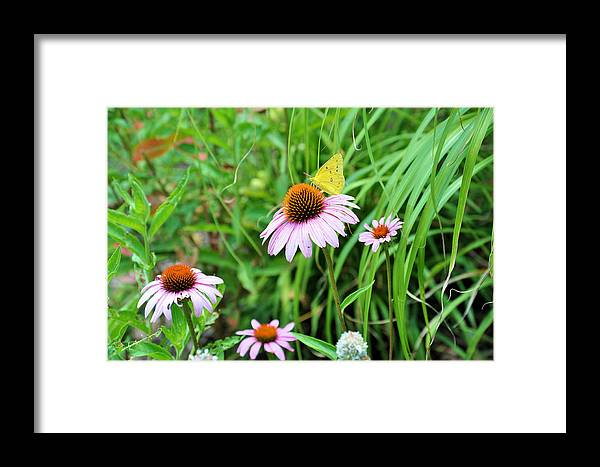 Gardens Framed Print featuring the photograph Arie's Garden by Jan Amiss Photography
