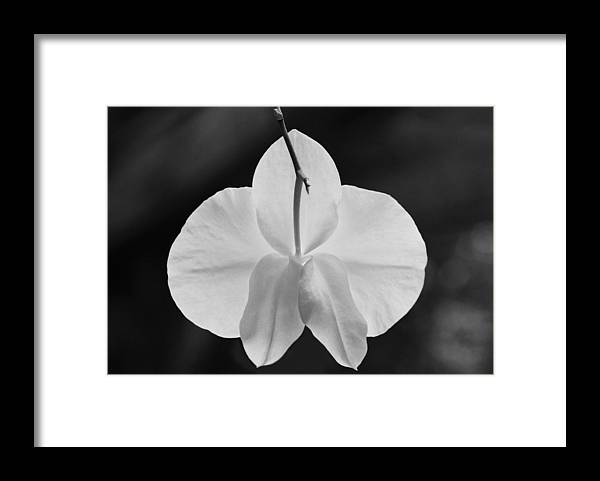 Framed Print featuring the photograph Arioso by Katherine Morgan