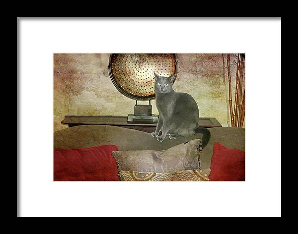 Cat Portrait Framed Print featuring the photograph Cat-tastic by Diana Angstadt