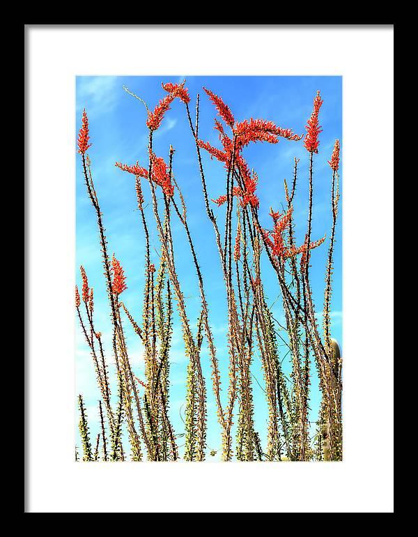 Arizona Nature Framed Print featuring the photograph Arizona Nature by John Rizzuto