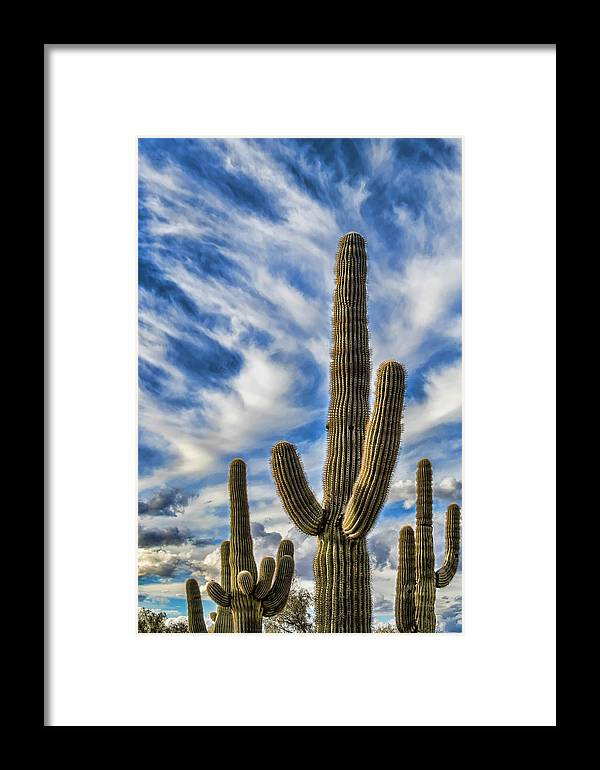 Desert Cactus Framed Print featuring the photograph Arizona Saguaro by Jon Berghoff