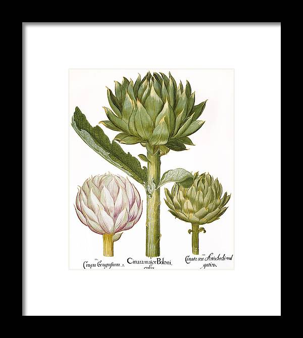 1613 Framed Print featuring the photograph Artichoke, 1613 by Granger