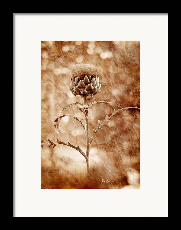 Flower Framed Print featuring the photograph Artichoke Bloom by La Rae Roberts