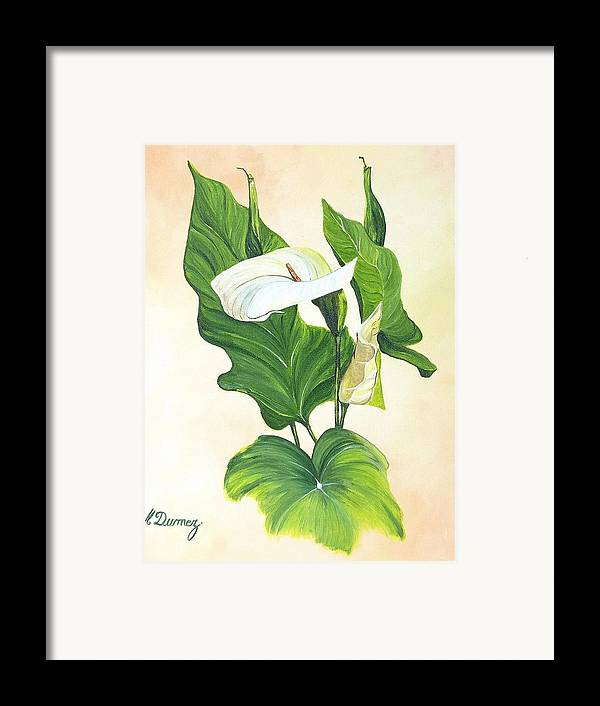 Flowers Framed Print featuring the painting Arums by Murielle Hebert