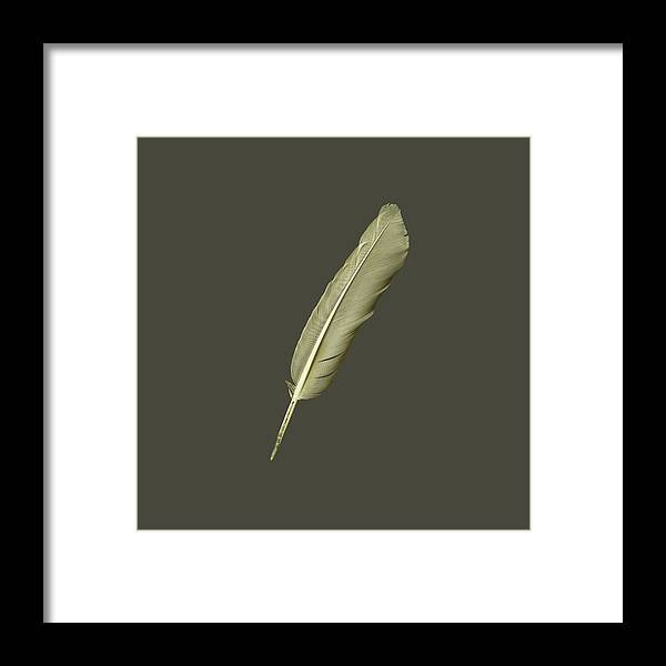 Feather Framed Print featuring the photograph As Light As A Feather by Richard Sayer