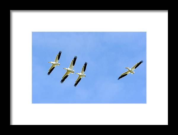 Bird Framed Print featuring the photograph Asleep At The Wheel by Dennis Hammer