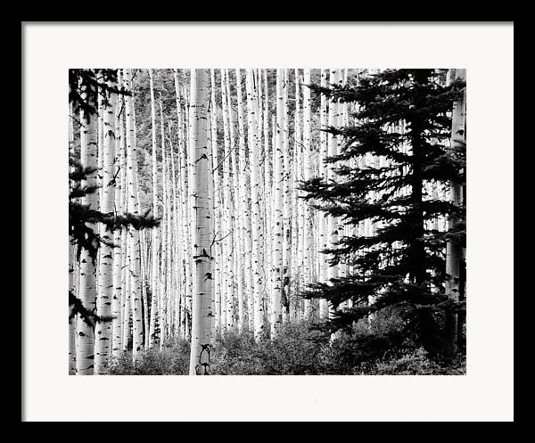 Landscape Framed Print featuring the photograph Aspen Afternoon by Allan McConnell