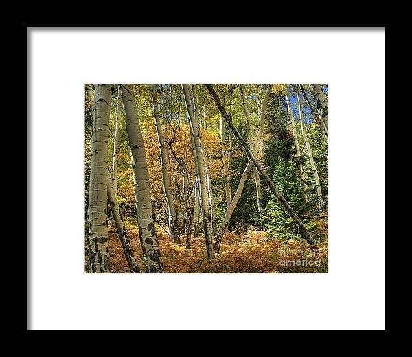 Aspen Framed Print featuring the photograph Aspen Ecosystem by Pete Hellmann