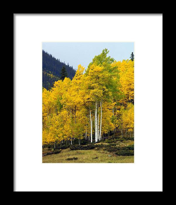 Fall Colors Framed Print featuring the photograph Aspen Fall 3 by Marty Koch