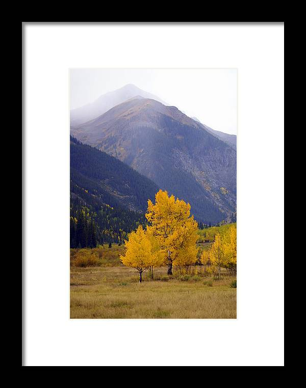 Fall Colors Framed Print featuring the photograph Aspen Fall 4 by Marty Koch
