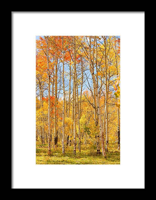 Autumn Framed Print featuring the photograph Aspen Fall Foliage Vertical Image by James BO Insogna