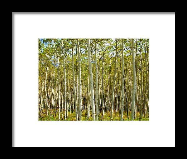 Aspen Framed Print featuring the photograph Aspen Forrest by Allison Jones