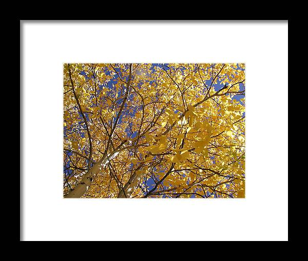 Framed Print featuring the photograph Aspen Leaves by Chandelle Hazen