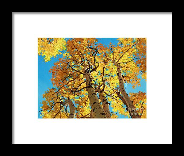 Aspen Trees Framed Print featuring the painting Aspen Sky High 2 by Gary Kim