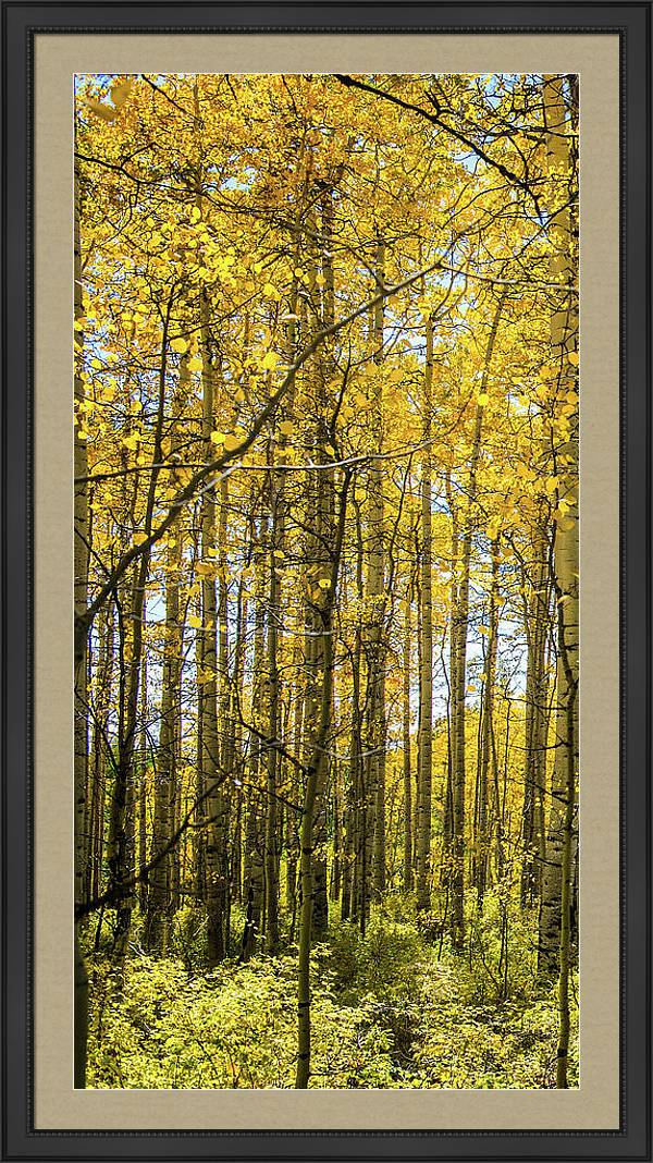 Aspen Triptych Panel No. 1  by Bud Simpson