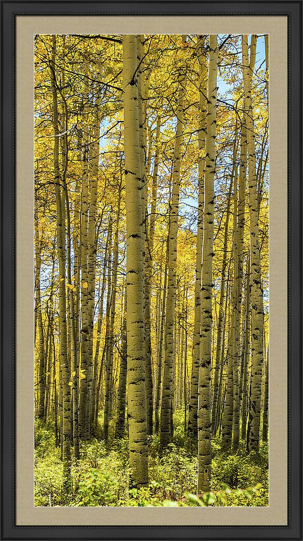 Aspen Triptych Panel No. 2  by Bud Simpson