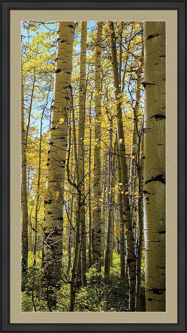 Aspen Triptych Panel No. 3  by Bud Simpson