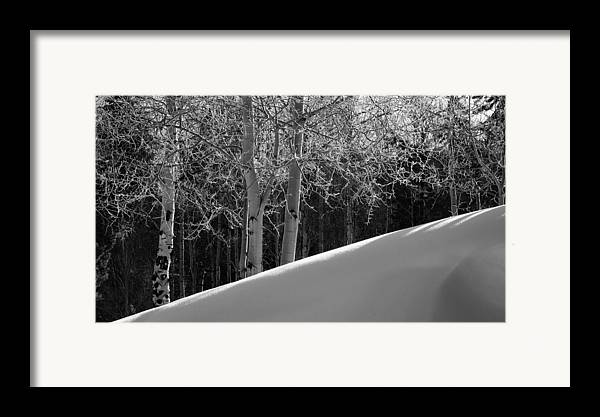 Colorado Framed Print featuring the photograph Aspencade by Skip Hunt