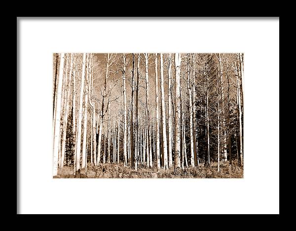 Aspens Framed Print featuring the photograph Aspens by Heather S Huston