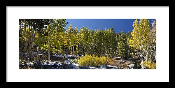 California Landscape Art Framed Print featuring the painting Aspens by Larry Darnell
