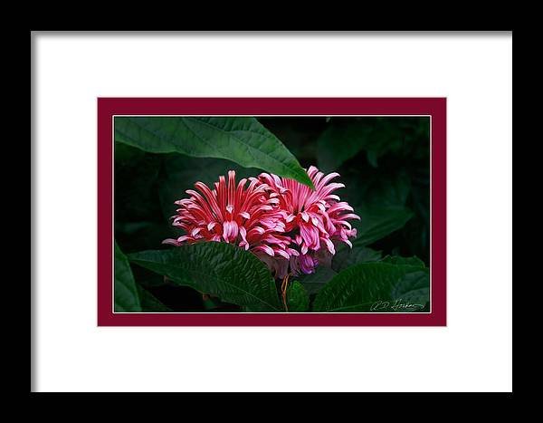 Flowers Framed Print featuring the photograph At Center by Richard Gordon
