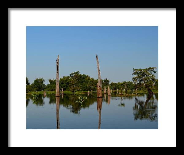 bald Cypress Framed Print featuring the photograph Atchafalaya Basin 18 by Maggy Marsh