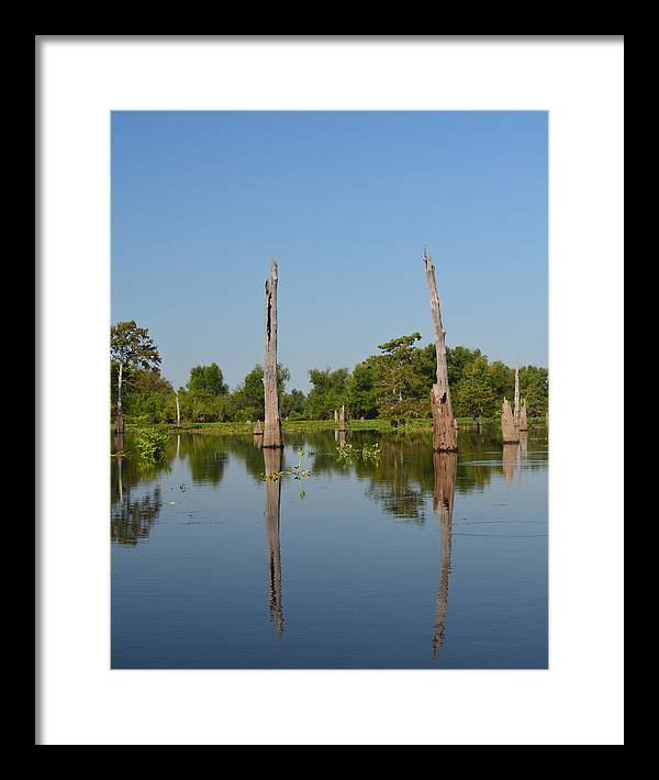 Bald Cypress Framed Print featuring the photograph Atchafalaya Basin 19 by Maggy Marsh