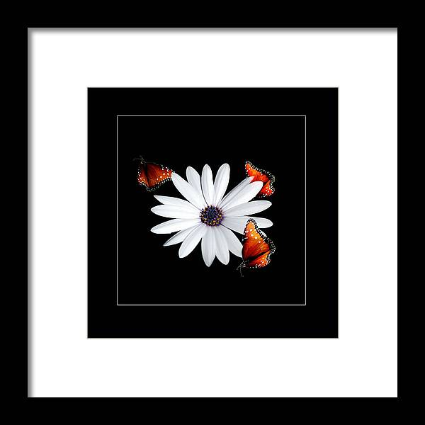Flower Framed Print featuring the photograph Attraction by Richard Gordon