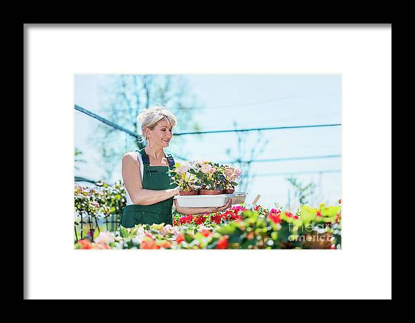 Garden Framed Print featuring the photograph Attractive Gardener Selecting Flowers In A Gardening Center. by Michal Bednarek